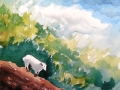 Ralf-Wall-Raflar_watercolour_8x10_mountain-goat