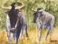 Ralf-Wall-Raflar_watercolour_5x7_Wildebeest