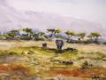 Ralf-Wall-Raflar_watercolour_8x10_Amboseli-Elephants