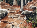 Ralf-Wall-Raflar_watercolour-ink_6x8_Algonquin-Trail