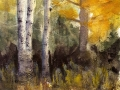 Ralf-Wall-Raflar_watercolour_8x10_birches-amongst-the-tamarac