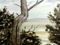 Ralf-Wall-Raflar_watercolour_8x10_dead-tree-overlook